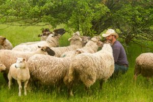 Lance and Sheep