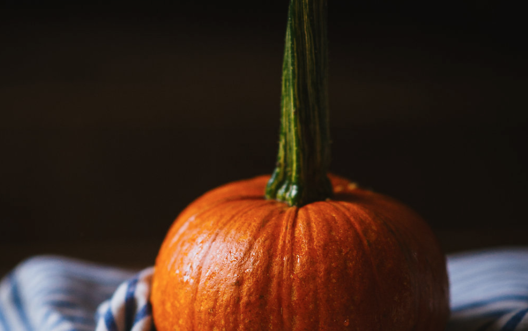 What's in Season During the Fall in Nova Scotia?
